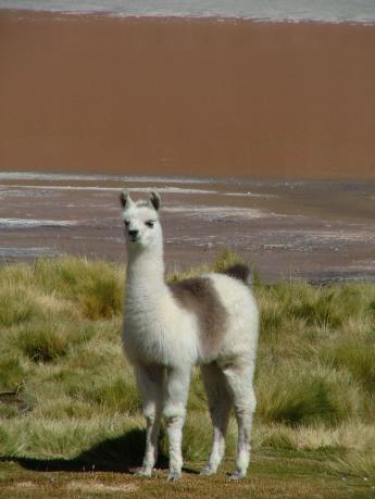 Bolivia-Uyuni-DSCF00541.JPG