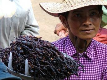 Cambodia-Dscf11441.jpg