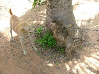 Cambodia-Dscf29031.jpg