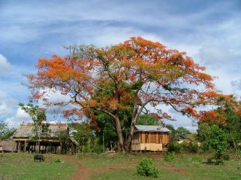Cambodia-Ratanakiri-Dscf15101.jpg