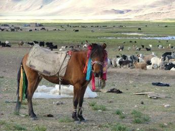 China-Tibet-DSCF5144.JPG