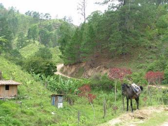 Honduras-DSCF1916.JPG