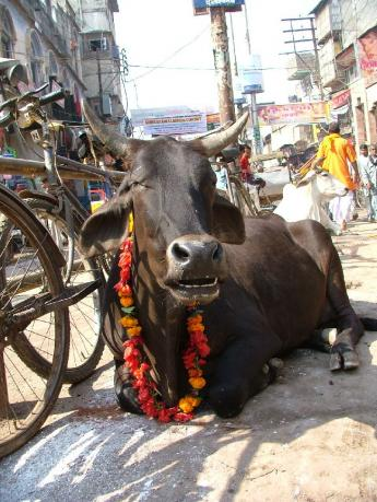 India-Varanasi-DSCF7533.JPG