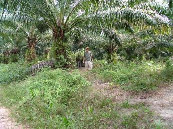 Indonesia-Kalimantan-DSCF5965.JPG