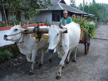 Indonesia-Sulawesi-DSCF7242.JPG