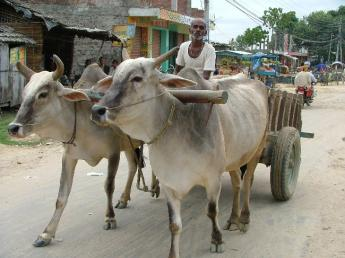 Nepal-Janakpur-DSCF62711.JPG
