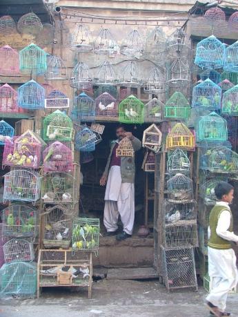 Pakistan-DSCF7924.JPG