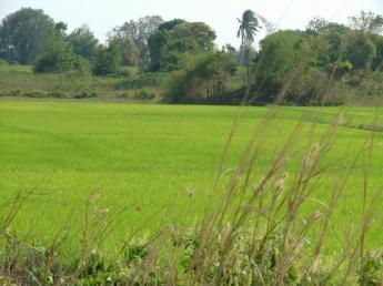Thailand-DSCF1856.jpg